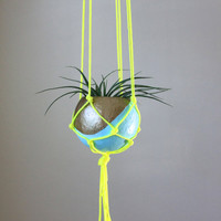 Macrame Air Plant Hanging Planter with Tillandsia in Pod Planter - Aqua, Gold Bronze, Neon Yellow.  Home Decor