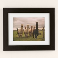 Alisha KP Alpacas At Tio Farm Art Print | Urban Outfitters