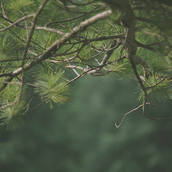 Pine Tree Branches Photography Green Home Decor Wall Art Home Decor Pine Tree Needles Forest Photography Print