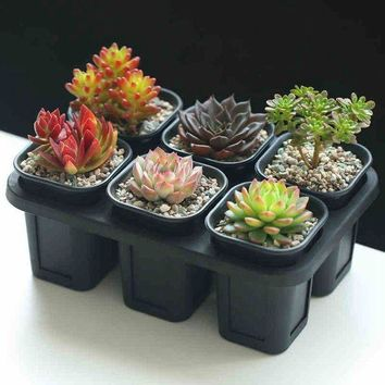 ONETOW Mkono Set of 6 Nursery Pots Seedling Planters Seed Tray for Garden Plants Seeds Succulents Use