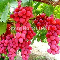 Hot Selling 20pcs/lot Rare Species Grape Seeds Giant Red Grapes Bonsai Fruit Seeds DIY Home Garden Potted Plant Fruit Tree