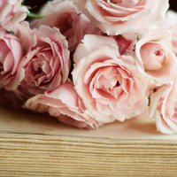 French country decor, pink, roses, romantic, book, pages, cottage chic, beige, feminine, flower wall art, fine art print, 8x10, 11x14