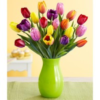 20 Multi-Colored Tulips (with FREE glass vase) - Flowers