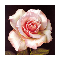 Pavilion of regimen wall painting decoration painting beauty salon hang painting flower without frame canvas for painting wall painting rose oil painting   02