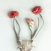 Floral Still Life of Ranunculus and Antler Modern White Minimal