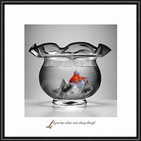 fish, bowl, colors, true, inspire