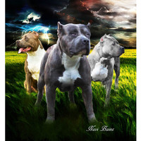 JQ Pitbull 3 Guardians Signature Select Queen Blanket - Free Shipping in the Continental US!