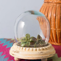 ModCloth Dorm Decor, French Plant and Simple Terrarium