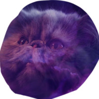Cat and Purple Sky Bean Bag Chair created by ErikaKaisersot | Print All Over Me