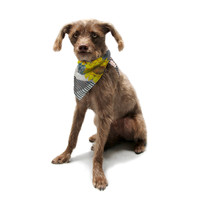 "S. Seema Z ""Finall Sunflower"" Yellow Flower Pet Bandana"