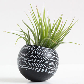 Black and White Herringbone Air Plant Pod with Air Plant