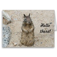Cute Squirrel - Hello there! Greeting Card from Zazzle.com