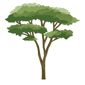 Small Acacia Tree Wall Decal, Safari Nursery Decals, Repositionable Fabric Decals