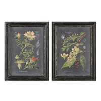 Uttermost Midnight Botanicals Wall Art, Set/2 - 56053