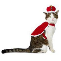 Petco Halloween King For A Day Cat Costume