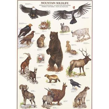 Mountain Wildlife Animal Education Poster 27x39