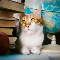 Librarian cat behind books Instant Digital Download art animal photography, blue and yellow wall art, for cats pets lovers, back to school
