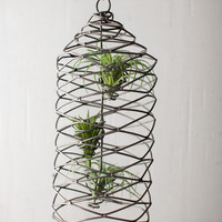 Hanging Wild Wire Air Plant Cage