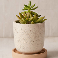 """Parker 4"""" Planter + Drainage Tray Set   Urban Outfitters"""