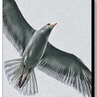 Seagull Painting - Bird Painting Canvas Print