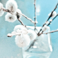 Pussywillow Branch Still Life - fine art photography, blue botanical print, dreamy wall art, white home decor, abstract art, Midwinter Blues