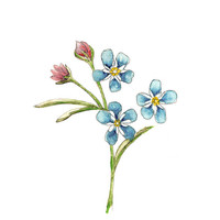 Wall art, art print,  forget-me-not blue flower, botanical Watercolor painting, affordable gift under 25,  giclee print. Gift for her.