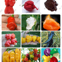 "24 kinds 200 vegetable fruit pepper seeds, Giant chili seeds + sweet pepper + Carolina Reaper"" + hot chilli bonsai plant potted"