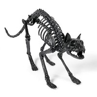 Black Skeleton Cat
