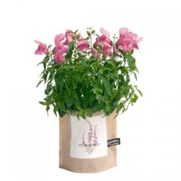 Garden in a Bag: Mini Snaps | Branch: Sustainable Contemporary Design for Living
