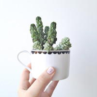 Succulent Kit with Hand Illustrated Teacup Planter (£32.00)