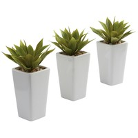 SheilaShrubs.com: Mini Agave w/ Planter (Set of 3) White 4972-S3 by Nearly Natural : Artificial Flowers & Plants