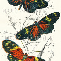 Antique Butterfly Print, Fall Color, Autum colours, Home Decor, Picture of Butterflies, Vintage Butterflies, Lepidoptery