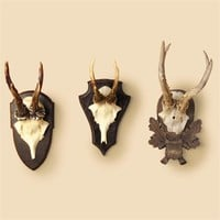 Set of 3 Trophy Antlers
