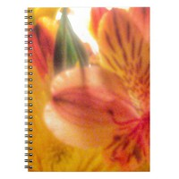 Orange Flowers Notebook