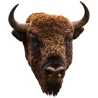 American Bison Mount Wall Decal