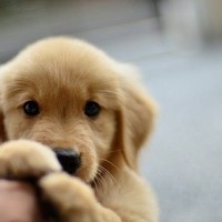 So precious. can i have him? | Animals