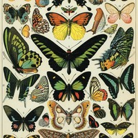 Cavallini & Co. Butterflies Decorative Decoupage Poster Wrapping Paper Sheet
