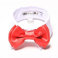 White Shirt Collar + Red Bow Tie