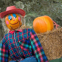 Scarecrow with Pumpkins and Hay, Stock Image, Instant Download, Stock Photography, Header Image, Halloween