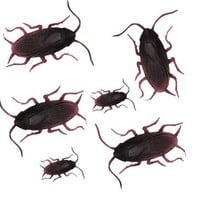 Classic Gag #4: Quality Fake Cockroaches (pack of 12)