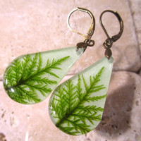 Stair Step Moss (Hylocomium splendens) aka Mountain Fern Moss Earrings, woodland, forest, bryophytes, plant jewellery, leaf jewelry