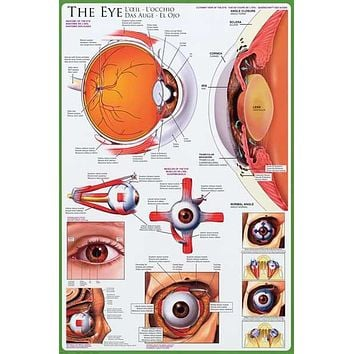 Anatomy of the Eye Optometry Education Poster 24x36