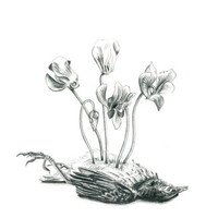 Cyclamens - flowers and bird art print - limited edition