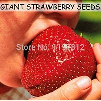 300pcs Giant strawberry seeds Super big and Red Strawberry Fruit Seed delicious bonsai plants gift for garden men free shipping