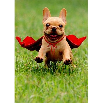 Thank You Greeting Card - Frenchie wearing Red Cape