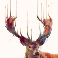 Red Deer // Stag Stretched Canvas by Amy Hamilton