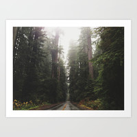 Redwoods in Prairie Creek Art Print by Taylor Mccutchan | Society6