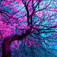 purple tree XII Art Print by blackpool | Society6