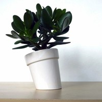 Leaning Planter