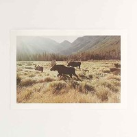 Kevin Russ Meadow Moose Art Print- Brown One
